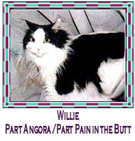 Picture of Willie